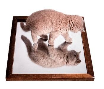 Отражение кота в зеркале